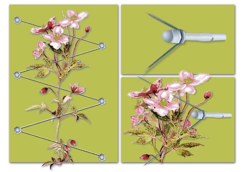 rankhilfen f r kletterpflanzen am haus oder im garten garten rankhilfen. Black Bedroom Furniture Sets. Home Design Ideas